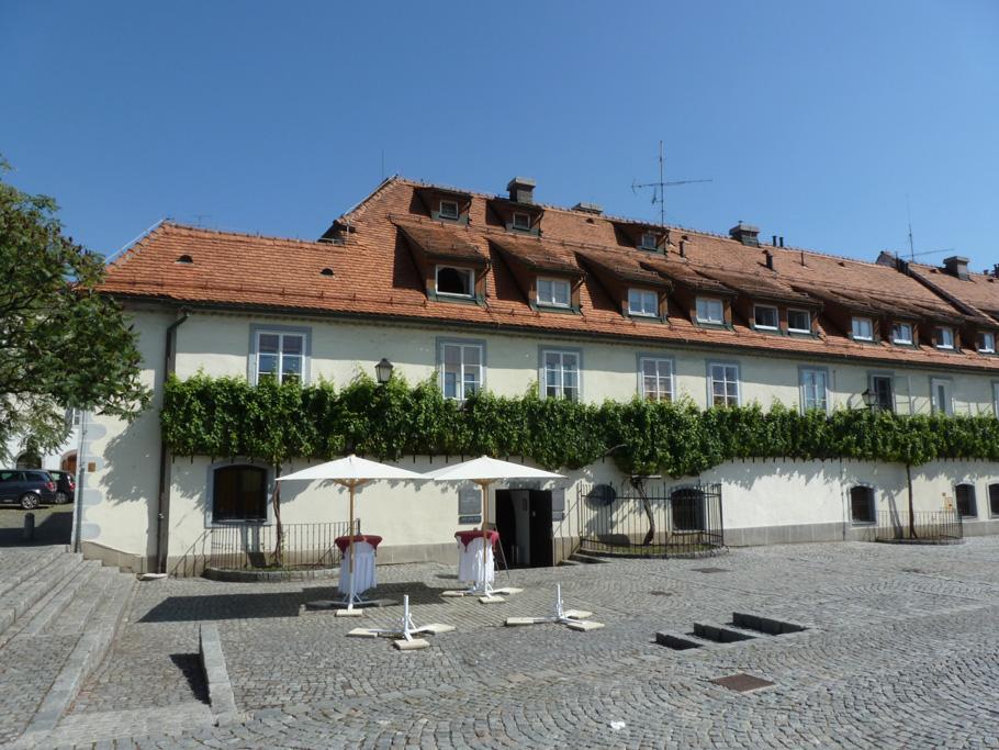 Maribor Vieille vigne 1