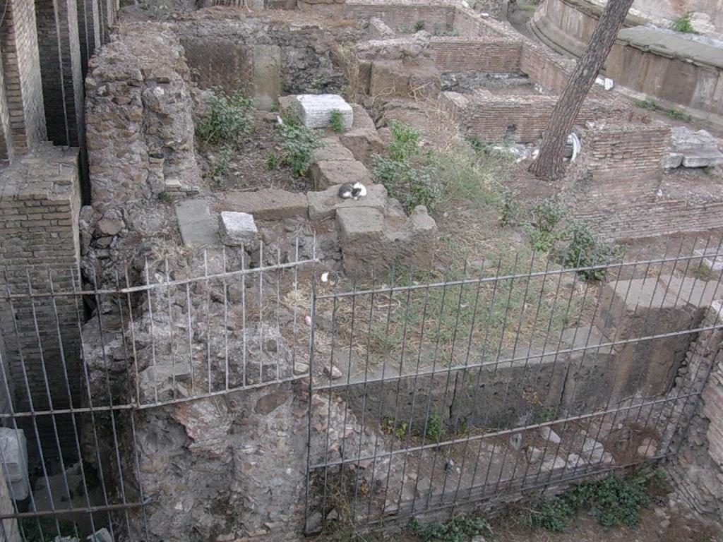 5 Largo Argentina - Resti dell'esedra centrale dei portici di Pompeo